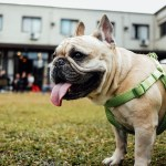 5 Tips for Taking Your Dog in Public