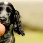 Playful Puppy: Facts and Tips About Your Puppy's Exercise Routine