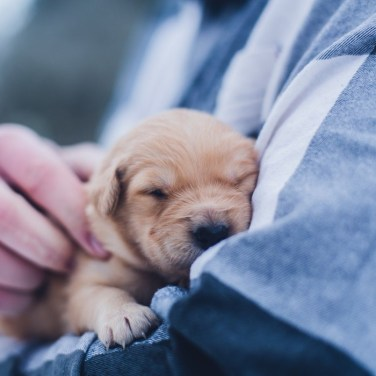 How to Educate Your Puppy In their First Few Months