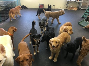 The Gym crew waiting patiently to meet new friends!