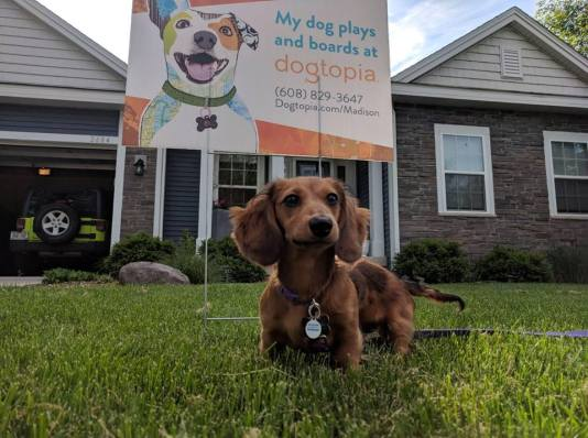 Lucy with one of our yard signs promoting her favorite place to play!