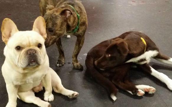 Cute-Dogs-friday-fun