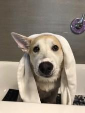 Baths, nails, clean ears and brush teeth!