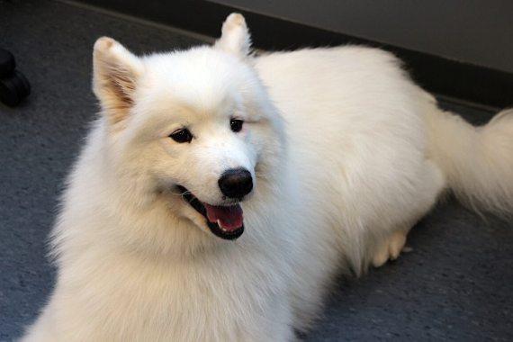 Momo shows off his fur after a clean cut!