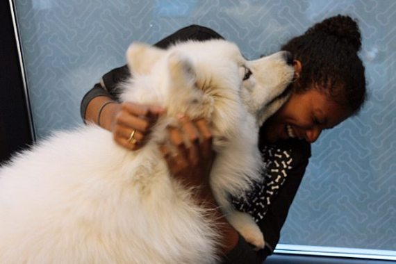 This Samoyed named Momo loves giving out kisses.