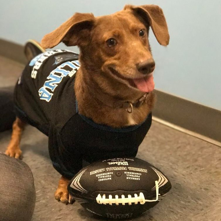 15ebb194d Dogtopia of Charlotte - Carolina Panthers Dog Daycare Pep Rally