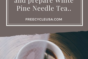 White Pine Needle Tea