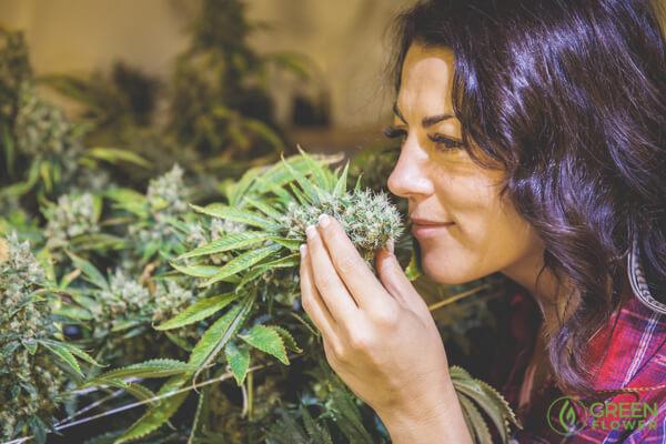 Ariana smelling a cannabis flower.