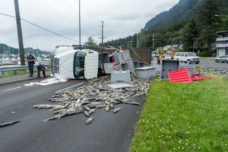 16,000lbs of salmon spill from a rolled truck on Egan Drive on July 25th, 2016. (Photo by Mikko Wilson / KTOO)