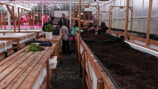 Students learn to plant carrots in the Coffman Cove greenhouse. (Video still by David Purdy/KTOO)