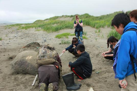 The kids examine the walrus carcass and cover their noses, attempting to block out an unforgettable stench. (Photo by Isabelle Ross/KDLG)
