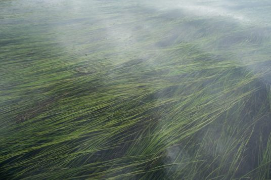 The Izembek National Wildlife Refuge has North America's largest eelgrass bed, the first to be designated as internationally critical to wildlife, including the black brant.
