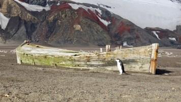 Photo by Jack Kreinheder. (Courtesy of Juneau Audubon)
