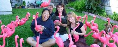 flock-of-friends