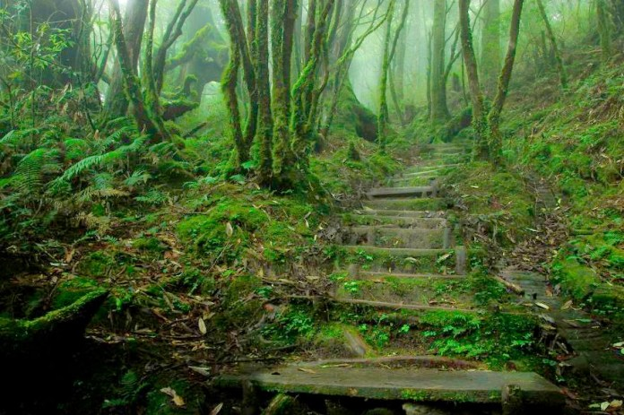 The Most Unique and Mysterious Forests in the World 5