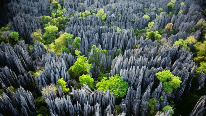 The Most Unique and Mysterious Forests in the World 6