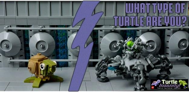Turtle Insanity Contest!