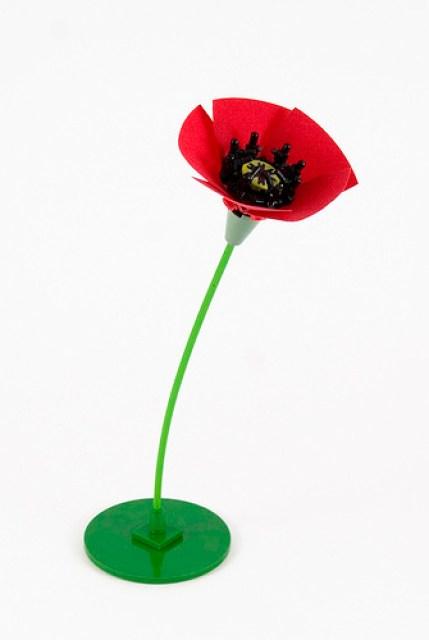 Poppy Flower - Unedited version