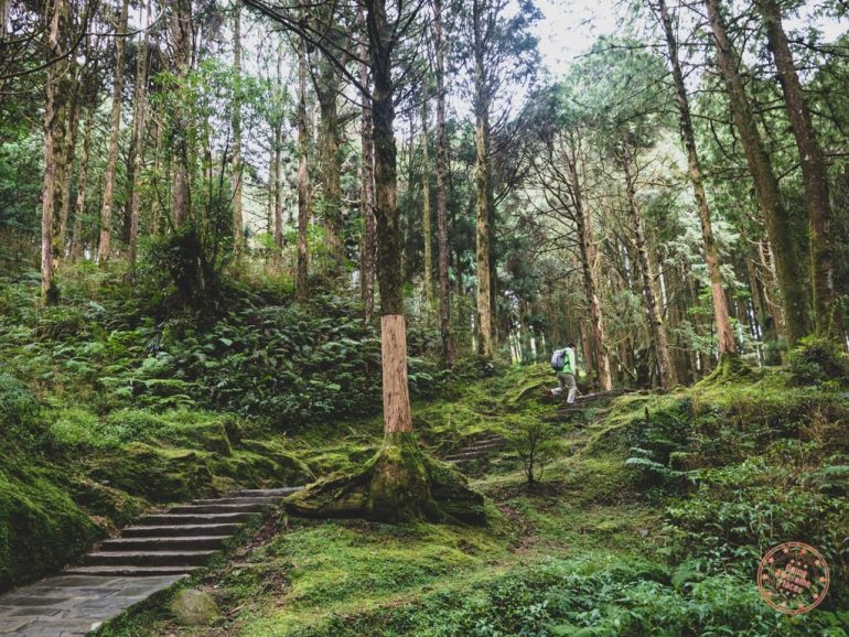 Hiking in Alishan (Photo courtesy Going Awesome Places)