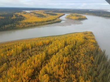 Fall colors along the banks of the Yukon River.