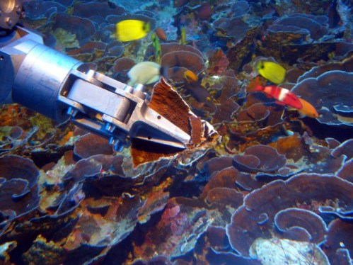 A robot arm attached to the submersible collects coral from the mesophotic zone off the coast of Maui.
