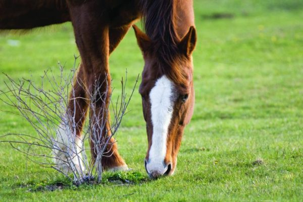 Eastern Equine Encephalitis confirmed in three PA counties - Farm and Dairy