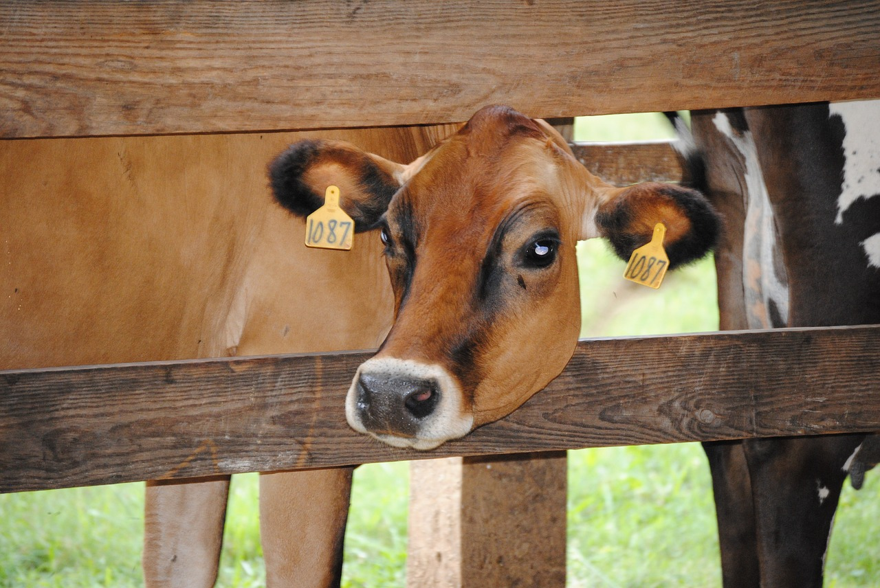 American Jersey Cattle Association Offers 14 Scholarships