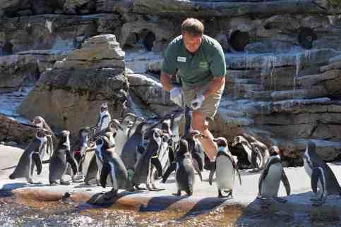 John Samaras at his fine dining establishment, penguins only!