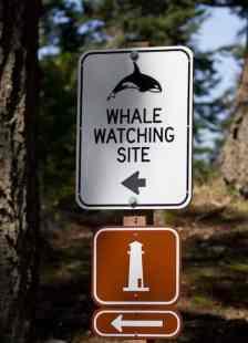 Whale Watching, San Juan Island