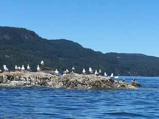 Getaway to Orcas Island