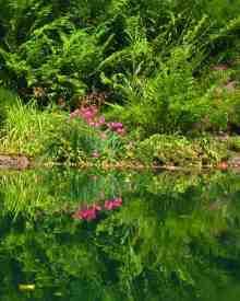 Jeannie-West-Pool-Reflection