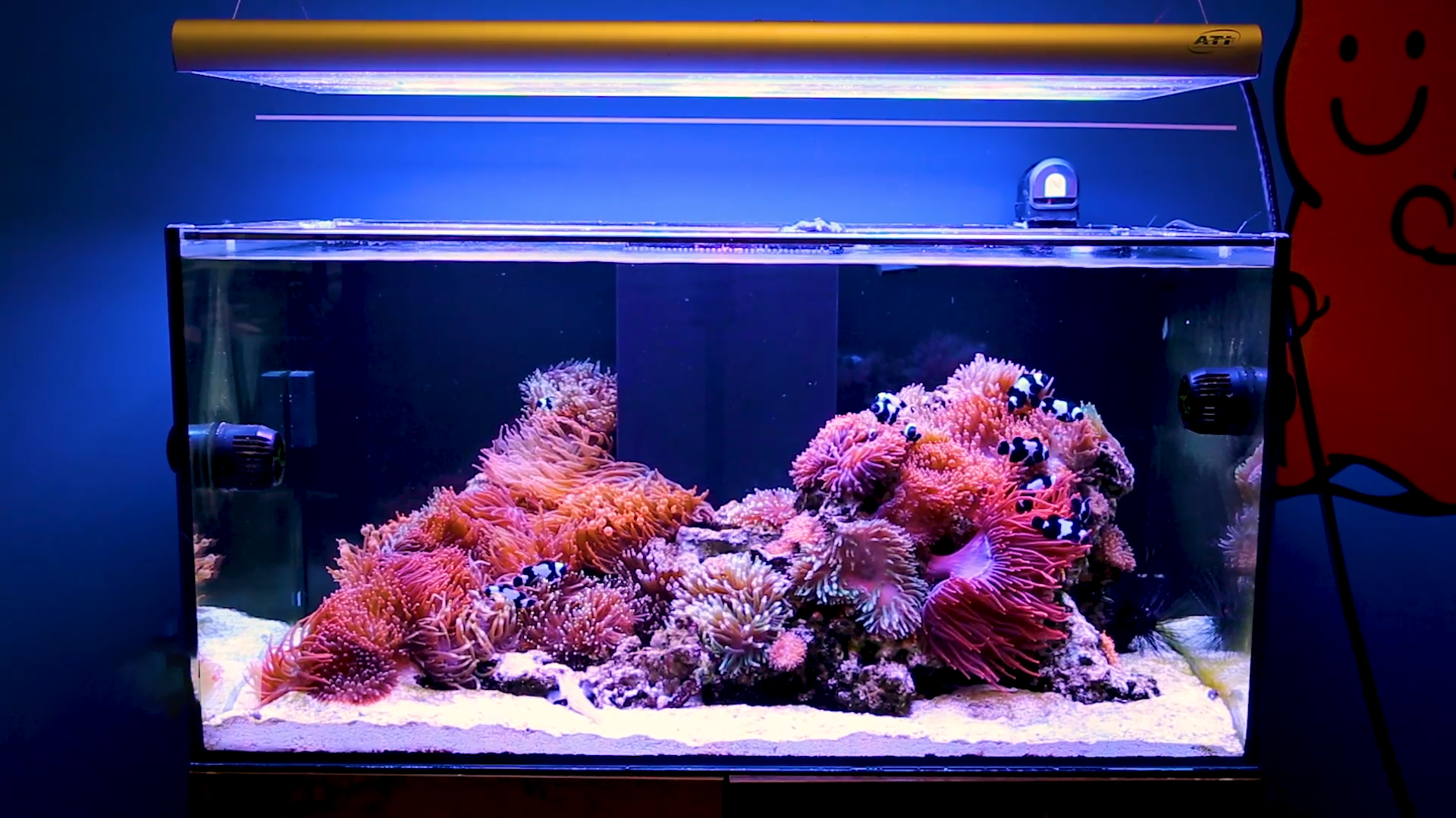 t5 reef lighting why t5 continues to