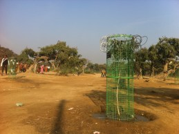 A tree guard with barbed wire, ultimate and necessary protection from monkeys etc.