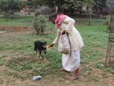 Feeding a hungry dog