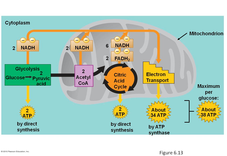 Biochemical Reactions Lesson