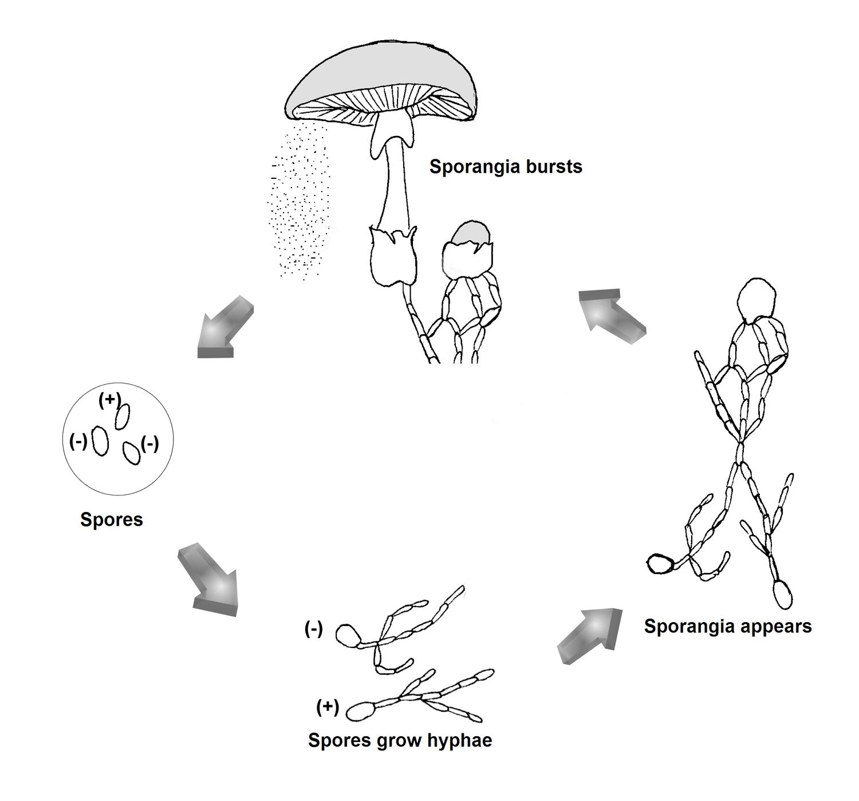 Fungi Lesson