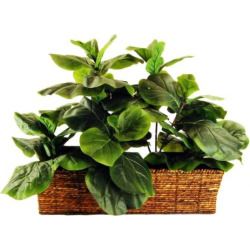 Designs by Lauren Artificial Fig Plant, Green