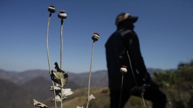 A los campesinos de Guerrero les preocupa la legalización de la siembra de la droga. (AP)