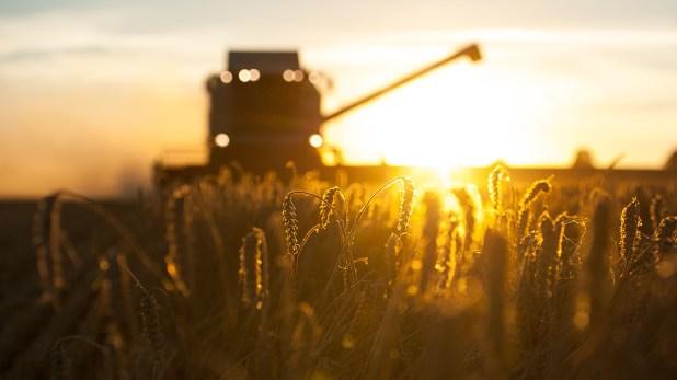 """""""La alta humedad y temperaturas templadas de los últimos 10 días, potenciaron en distintas localidades de la provincia la apertura de vainas y la germinación del grano"""""""