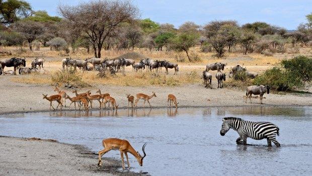 Preservar los animales en extinción no es necesariamente una buena idea, según Pyron. (iStock)