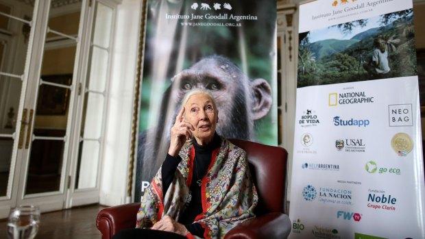 Jane Goodall a solas con Infobae. Su vida, su pensamiento y su legado. (Agustin Marcarian)