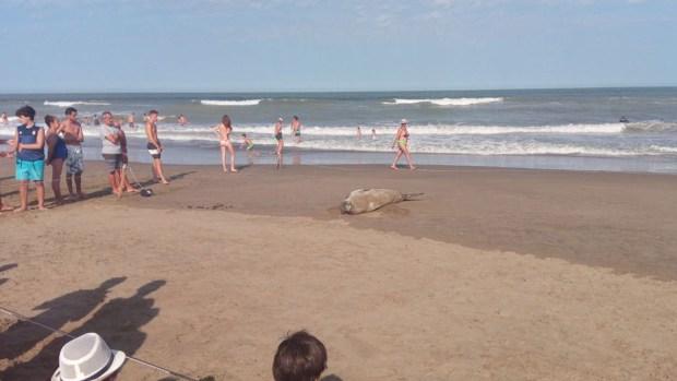 El personal de seguridad de la playa señalizó el lugar para que no se le acerquen demasiado