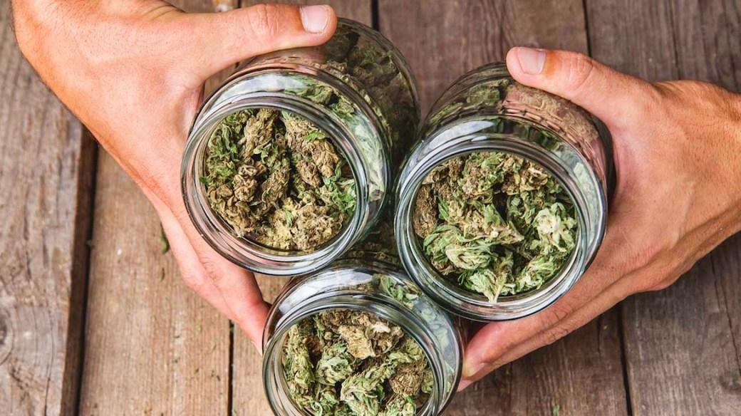 Flores de Marihuana