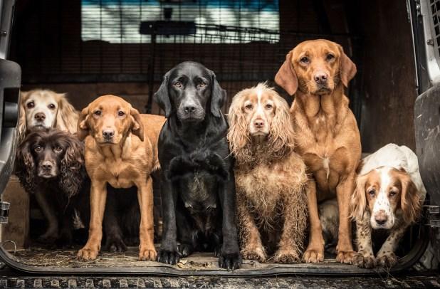 """""""Sobre la base de estos hallazgos, los perros pueden considerarse limpios en comparación con los hombres barbudos"""""""
