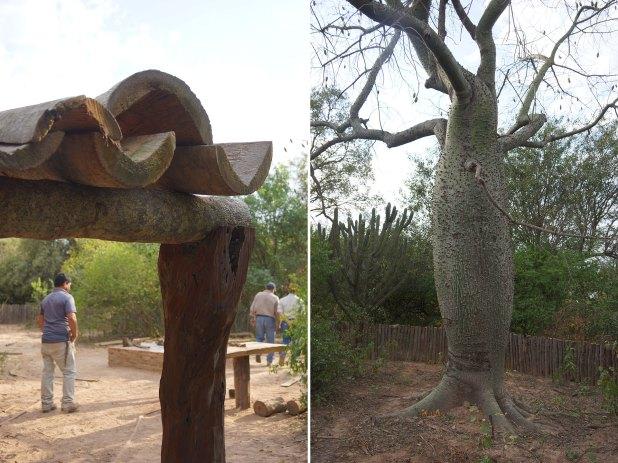 Una galería techada con troncos de palmera y una cerca que abraza un hermoso ejemplar de palo borracho (Raquel Peiro)