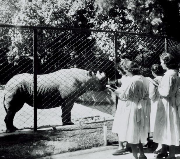 Foto del Zoológico de Buenos Aires de mediados siglo XX (Foto: AGN – C Bertonatti)