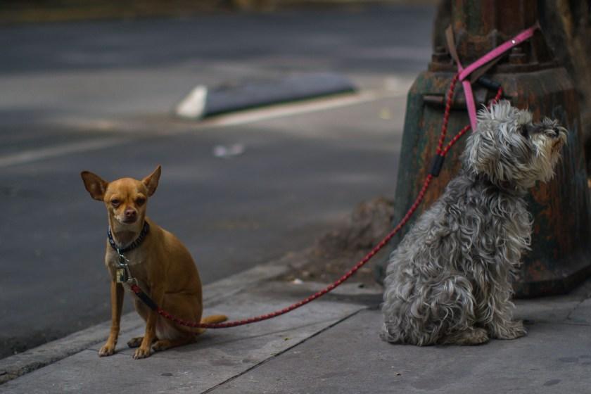 En la capital mexicana el maltrato animal se castiga con cárcel (Foto: ISAAC ESQUIVEL /CUARTOSCURO)