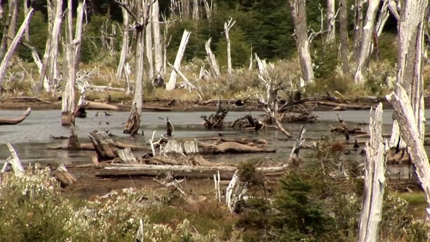 Durante 2015, solo unas 13 especies exóticas provocaron un daño de 2.543 millones de dólares cuantificadas en pérdidas de producción