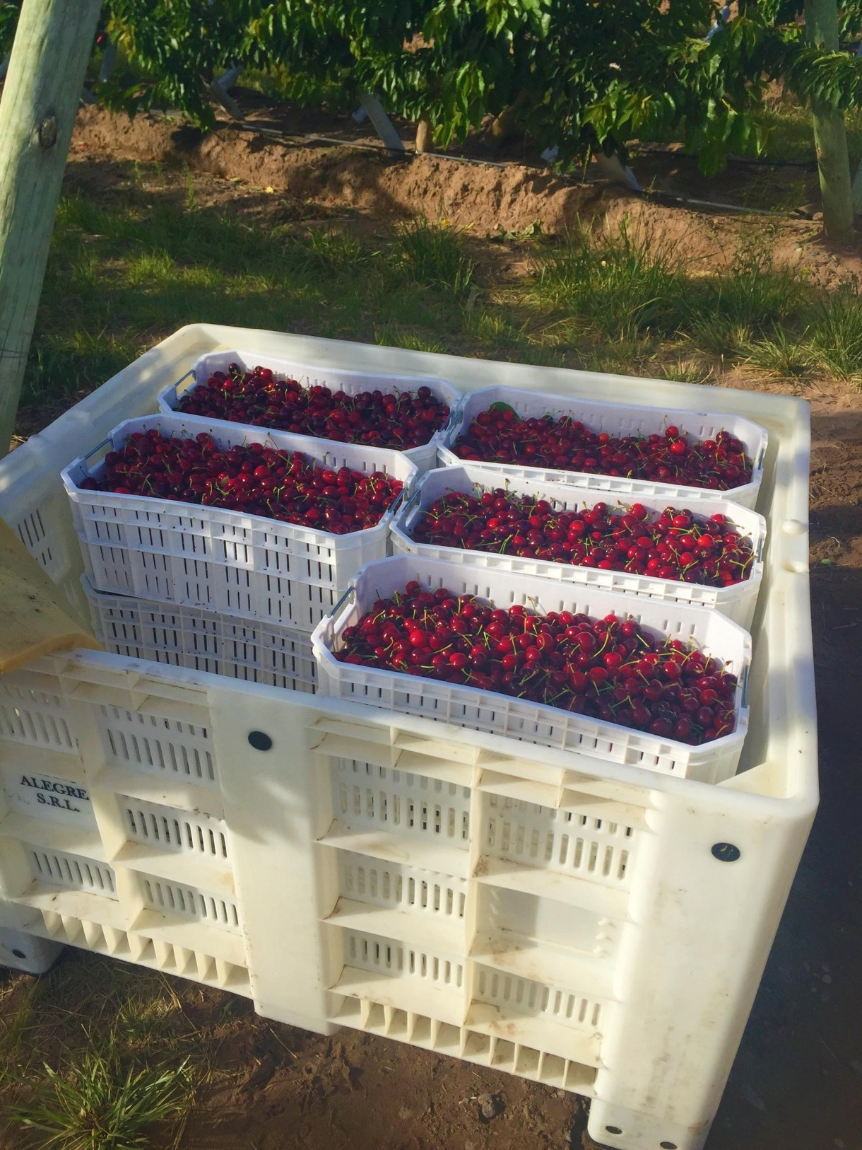 El candidato a gobernador de Neuquén quiere incrementar las exportaciones de fruta y empoderar a la vitivinicultura