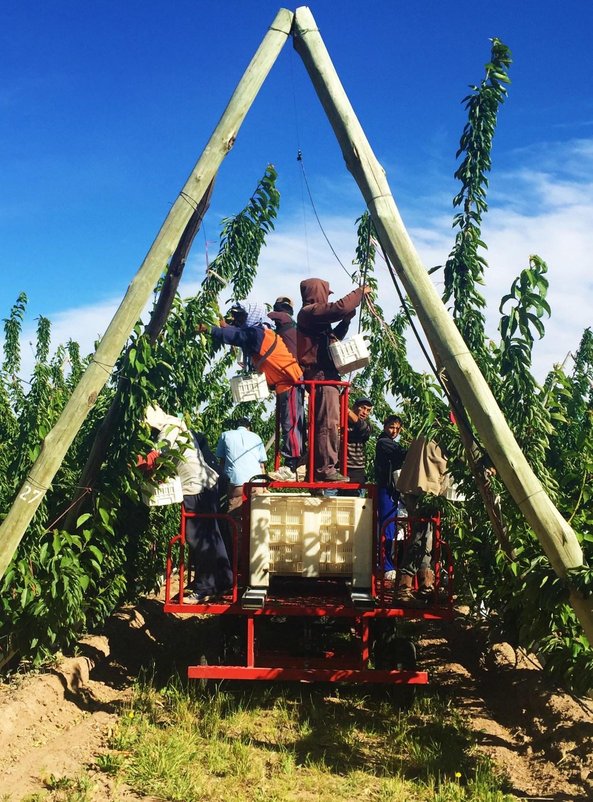 La industria frutihortícola neuquina, en plena expansión
